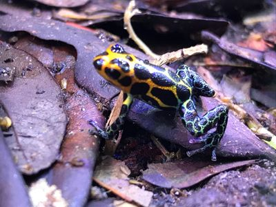 Basic Care For Dart Frogs The Houston Frog Society