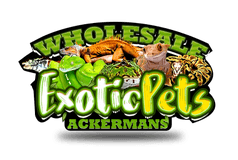 Wholesale Exotic Pets