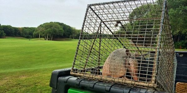 Jacksonville Armadillo Removal Trapping. Animal Removal Jacksonville FL