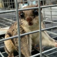 Squirrel Removal Jacksonville, Squirrel in attic, squirrel in eaves, squirrel in crawl space screen