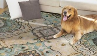 Rugs, traditional rugs, modern rugs, outdoor rugs, carpet, Stark rugs and carpet, Masland carpets,