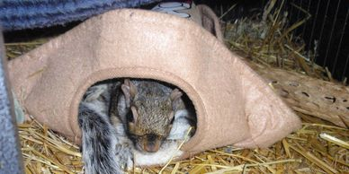 Granted with his paralysis he can not have the luxury a normal squirrel would prefer as he needs to