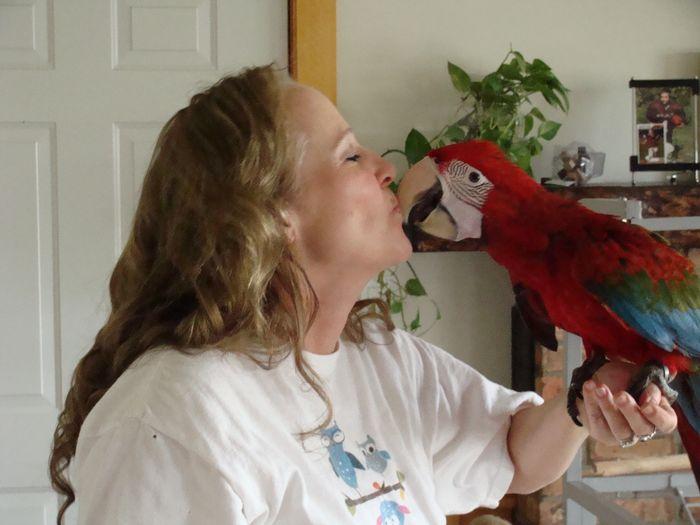 Susan's Parrot Place - Parrots, Parrot Toys, Food, Accessories