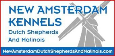 New Amsterdam Dutch Shepherds ans Malinois