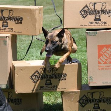 K9 Unlimited K9 Training