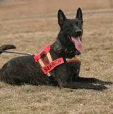 Third party K9 certification