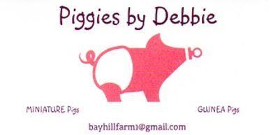 """Piggies by Debbie"" specializing in miniature pigs and Guinea Pigs. Email  bayhillfarm1@gmail.com"