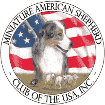 miniature american shepherd club