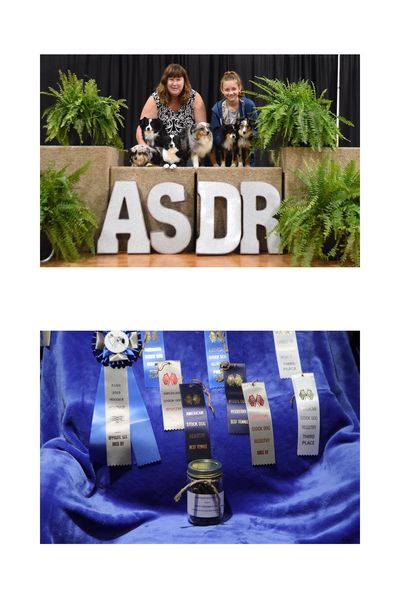 Toy Aussie Show Results and win photo with asdr marlowin toy aussies