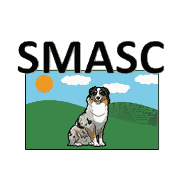 southeaster miniature american shepherd club - marlowin miniature american shepherds and toy aussies