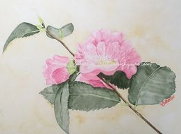 """Bud and Bloom on Vine"" High-Fragrance Camellia by Leigh Anne Sutherlin"