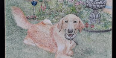 Colored Pencil drawings of your favorite pet can be commissioned!