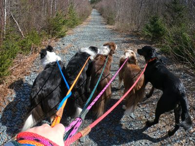 Teaching loose leash walking doesn't happen overnight, but practice makes perfect!