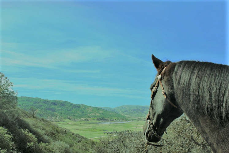 The Equine Endocrine System and RoundUp