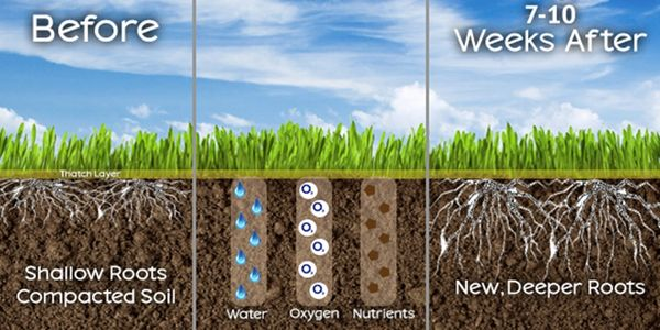 Benefits of Core Aeration Service in Winnipeg. Lawn Aeration helps soil density.