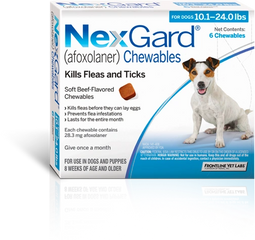 Tick and flea control Dogs health