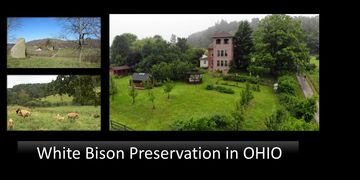 White Bison Association presents White Bison Preservation where the White bison herd in Ohio