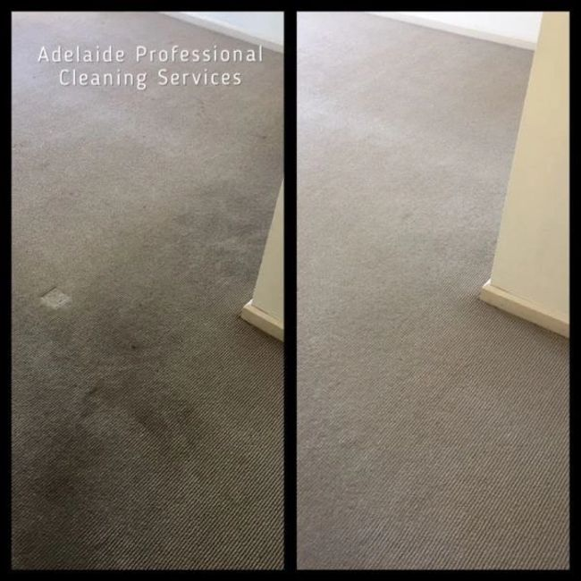 Carpet Dry Cleaning Services By Adelaide Professional Cleaning Services. 0435 585 136
