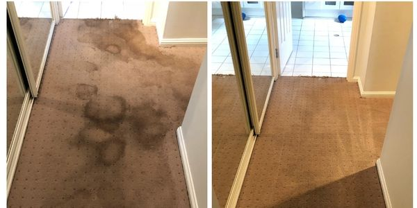 Pet Stain Treatment Adelaide