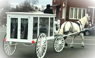 White horse drawn hearse for funeral in NJ, NYC , Long Island