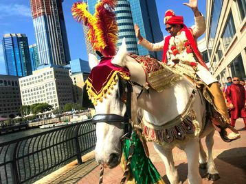 One of our decorated white horses for South Asian Wedding Baraats