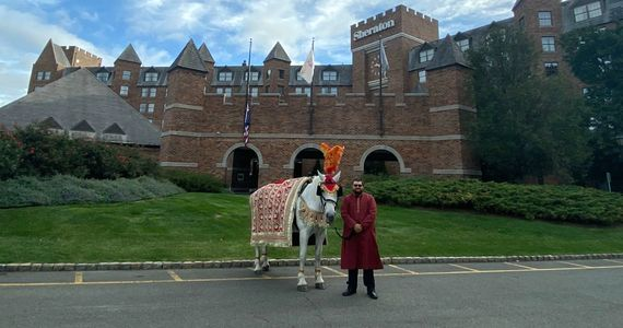 Indian Wedding Baraat Horse for Procession