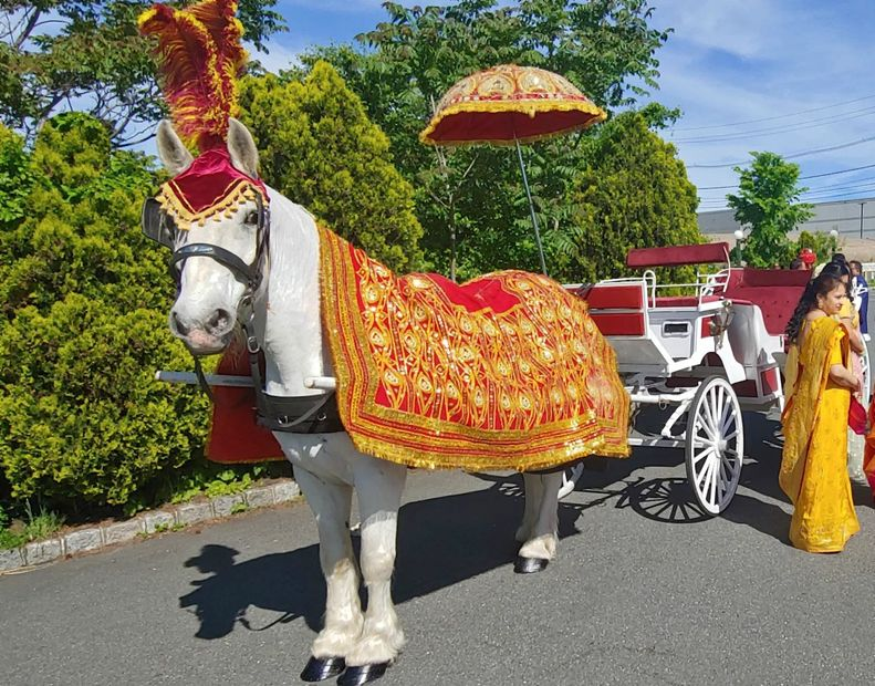 Decorated white horse and carriage for Baraat Procession.