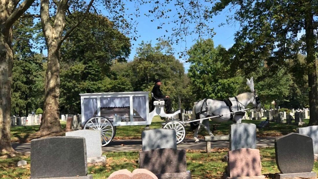 White Horse and White Carriage for Funeral aka horse drawn hearse