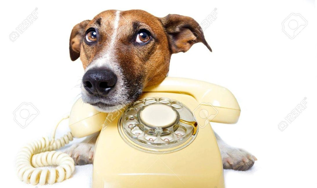 Dog wants to use the phone