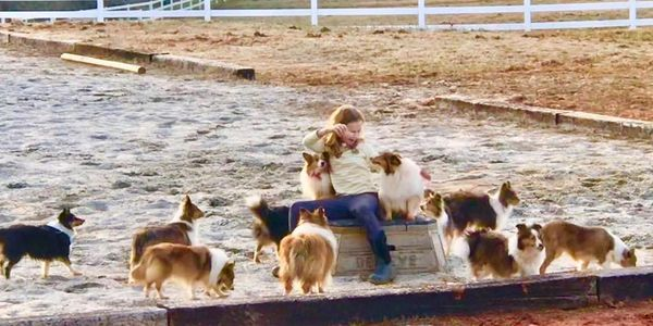 My niece playing with our dogs in the ring last winter.