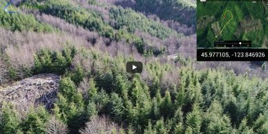 drone forestry