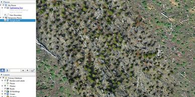 drone forestry orthophoto