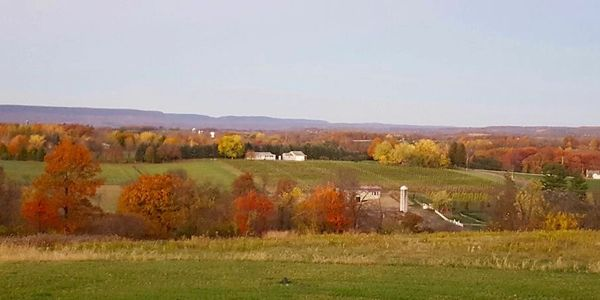 M&M Vineyards-Fall Colors