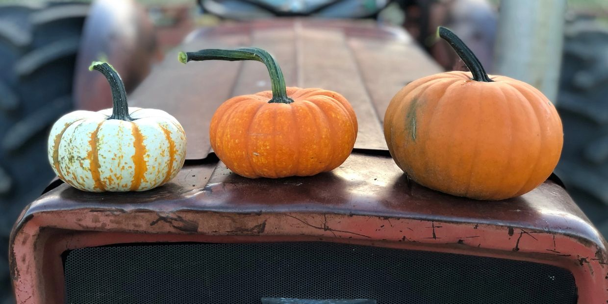 All of our pumpkins & squash are planted by hand using organic farming principles. You'll definitely