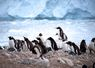 Cuverville is home to the peninsula's largest population of Gentoo penguins - Antarctica