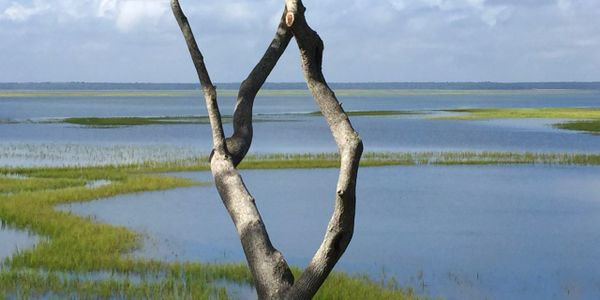 View of the Salt Marsh at St. Marys GA