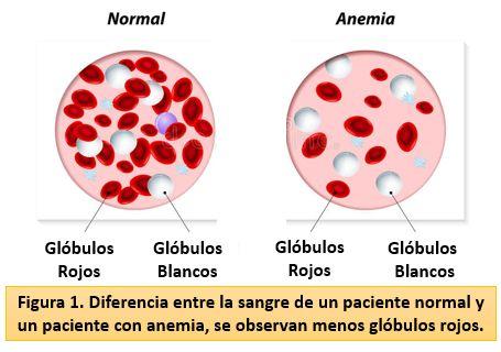 valores normales de globulos rojos y blanco en mujeres embarazadas