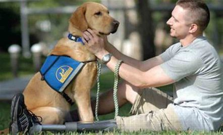 Yellow lab service dog sitting facing his owner - a young man with a left leg below knee prosthesis.