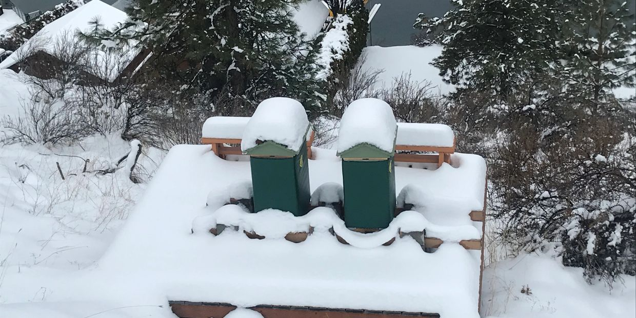 Adam & Eve Hives during the winter, January 2020 - Eden's Honey
