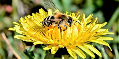 Wasp, hornet and bee treatments to remove nests from your home, cottage or business