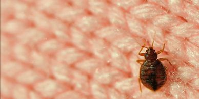 Bed bug treatments for your home or cottage