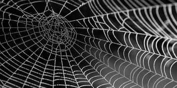 Exterior spider spray treatment to eliminate cobwebs around your home or cottage