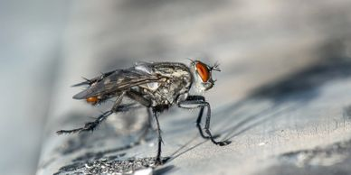 Fly control programs and services including drain service, fogging, fly lights and fly traps