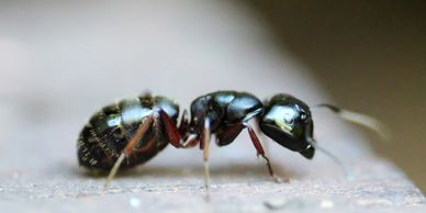 Carpenter ant treatment with interior and exterior sprays