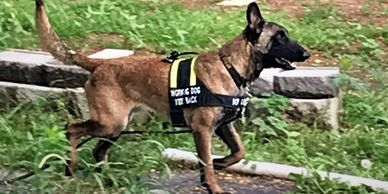 K9 Creed - tracking dog specializing missing adults and children. Missing persons