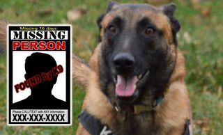 K9 York - tracking dog specializing missing adults and children. Missing persons