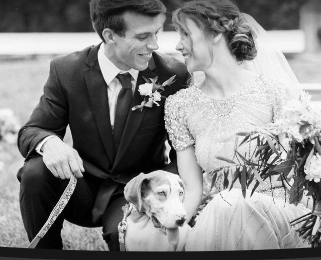 Wedding Day Dogs
