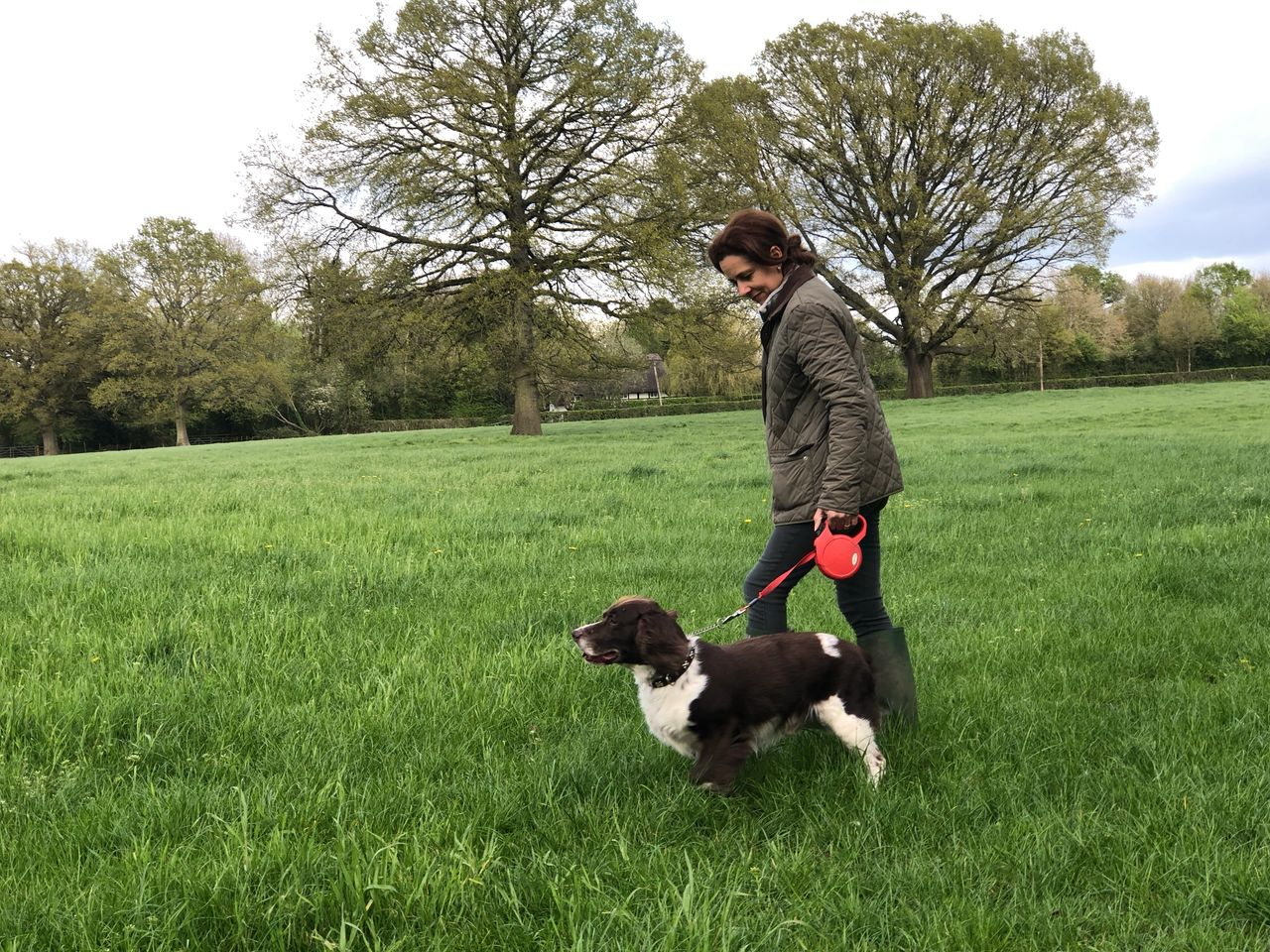 What to look for in a Dog Walker
