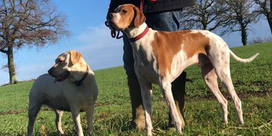 dog walking Newbury, puppy sitting, home dog boarding, dog sitting Berkshire