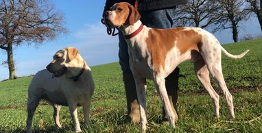 Home Dog boarding, pet sitting, dog sitting, home boarding, Reading, Theale, Highclere, Hampshire